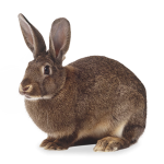Products for rabbits